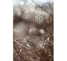 Pure Morning II Photographic Print