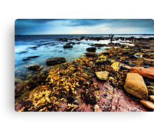Along The Reef Canvas Print