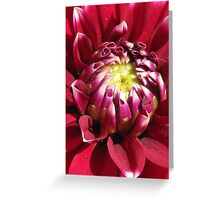 Dahlia-ing  Greeting Card