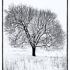 Tree in the Snow by Raymond  Snip
