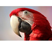 Green wing macaw portrait Photographic Print