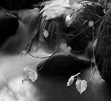 Leaves Over a Stream by Nazareth