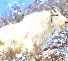 Mountain Goats In the Alpine Wyoming Mountain - Rocky Mountain Goat by IMAGETAKERS