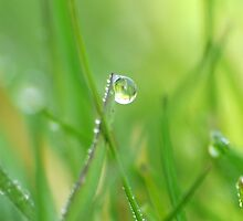 Dewdrops on grass by ruthjulia