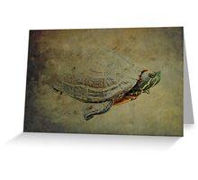 Turtle Emerging Greeting Card