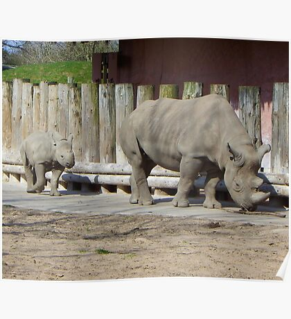 The Rhinos Poster