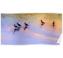 Birds in The Camargue 02 Poster