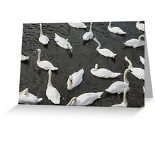 An Invasion of Swans Greeting Card