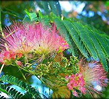 Mimosa by Lisa Taylor