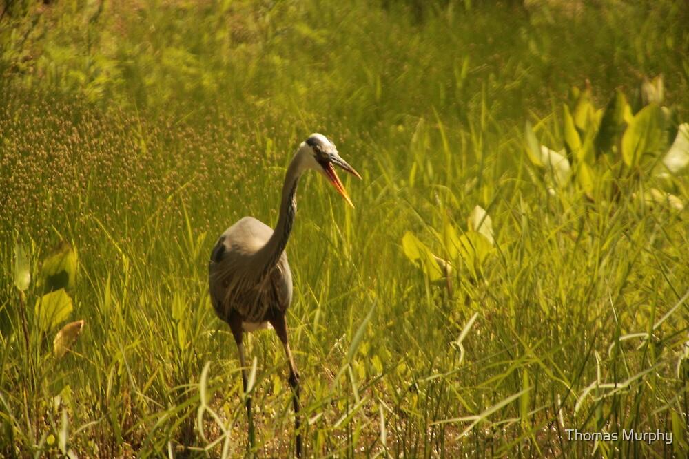Urban 'Great Blue Heron' say's Hello! by Thomas Murphy