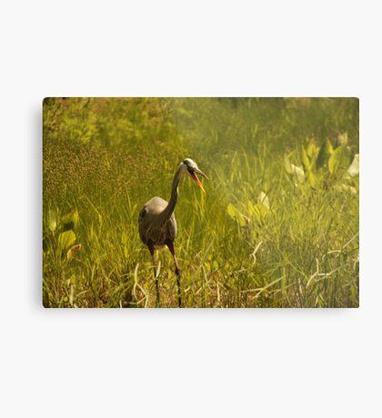 Urban 'Great Blue Heron' say's Hello! Metal Print