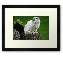 Princess Gracie Spies a Squirrel Framed Print