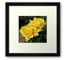 Beauty Queens - Sunkissed Golden Roses Framed Print