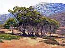 Eucalyptus Grove 2 Harbors Catalina Island by Randy Sprout