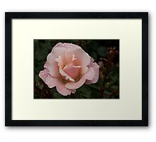 Rose and Rain 1 Framed Print
