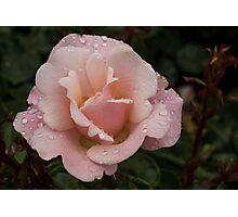 Rose and Rain 1 Photographic Print