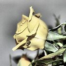 My Yellow Rose by aprilann