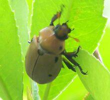 Beetle Feet! by Navigator