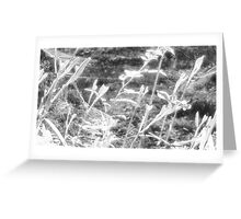 Spider Webs & Day Lillies Infra Red EX Greeting Card