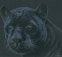 Panther colour pencil art by DRDubois
