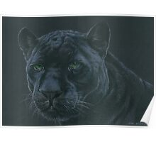 Panther colour pencil art Poster