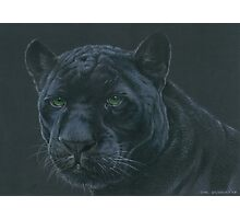 Panther colour pencil art Photographic Print