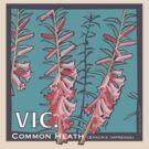 Common Heath - Victorian State flower by contourcreative