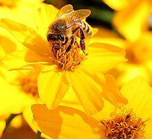 Bee on yellow flower by LeJour