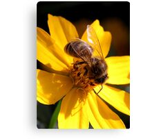 Bee on yellow flower (2) Canvas Print