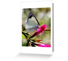Pearl White Butterfly (3) Greeting Card