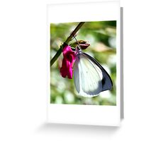 Pearl White Butterfly (4) Greeting Card