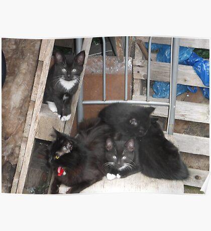 Cat/Kittens -(200613)- Digital photo/Fujifilm FinePix AX350 Poster