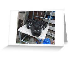 Kittens -(210613)- Digital photo/Fujifilm FinePix AX350 Greeting Card