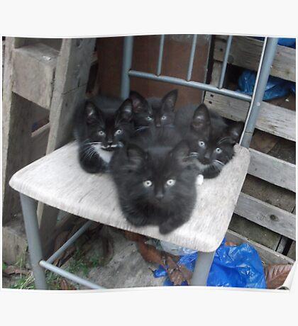 Kittens -(210613)- Digital photo/Fujifilm FinePix AX350 Poster