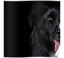 Half a dog Poster