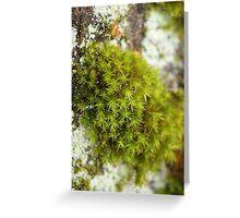 Mossy Magic Greeting Card