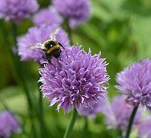 BEE HEAVEN by paulasphotos101