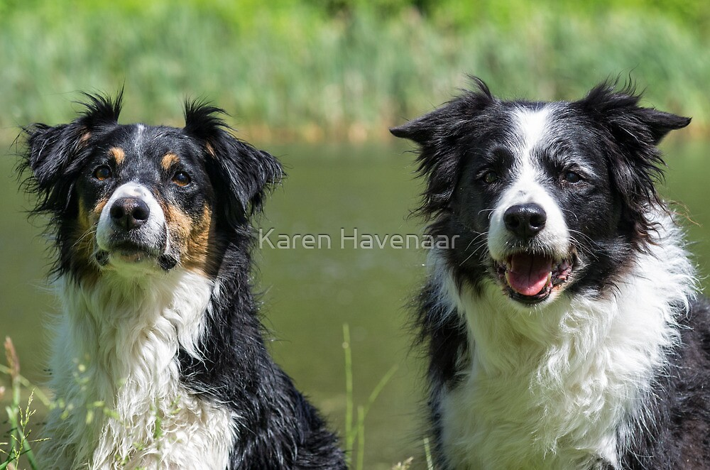 Spot & Zoë by Karen Havenaar