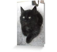Seated kitten I -(210613)- Digital photo/Fujifilm FinePix AX350 Greeting Card