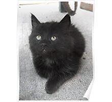 Seated kitten I -(210613)- Digital photo/Fujifilm FinePix AX350 Poster