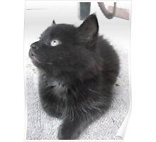 Seated kitten II -(210613)- Digital photo/Fujifilm FinePix AX350 Poster
