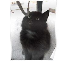 Seated kitten III -(210613)- Digital photo/Fujifilm FinePix AX350 Poster