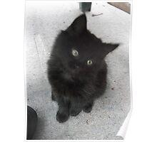 Seated kitten V -(210613)- Digital photo/Fujifilm FinePix AX350 Poster