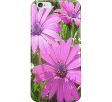 Purple And Pink Tropical Daisy Flower iPhone Case/Skin
