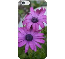 Purple and Pink African Daisy Flowers iPhone Case/Skin