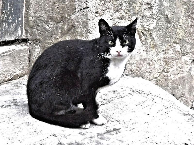 Black Cat in Sighisoara, Draculya's city by ivDAnu