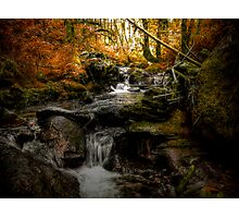 Beauty Under The Trees Photographic Print