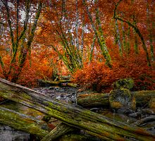 You Can't Stop Me by Charles & Patricia   Harkins ~ Picture Oregon