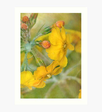 precious primrose Art Print