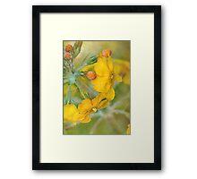 precious primrose Framed Print